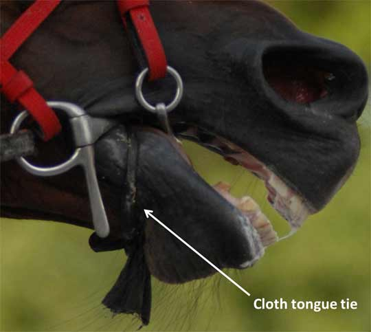 A cloth tongue tie