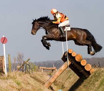 Event horse in cross country ohase