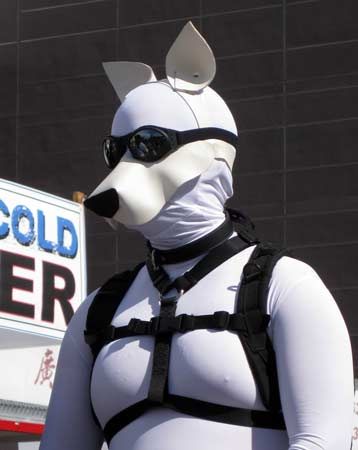 A white pup, one of the leaders of the human animal procession at Folsom 2012
