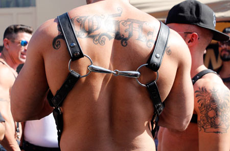 Chest harness attached with horse bit