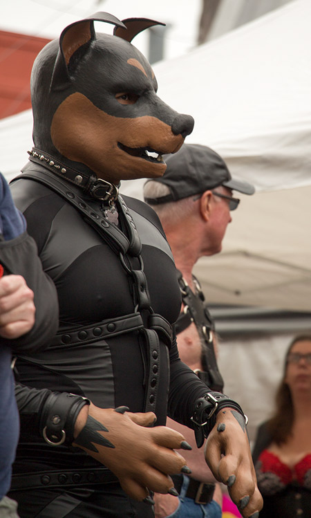 An unknown playful puppy at Folsom 2014
