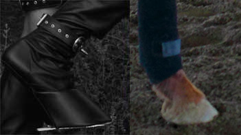 Hoof boot and horse hoof