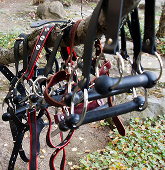 Several of my bit gags, bit gag trainers and head harnesses hanging from a tree to dry.