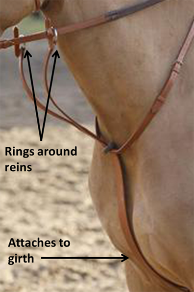 Bio-equine wearing a running martingale with labels