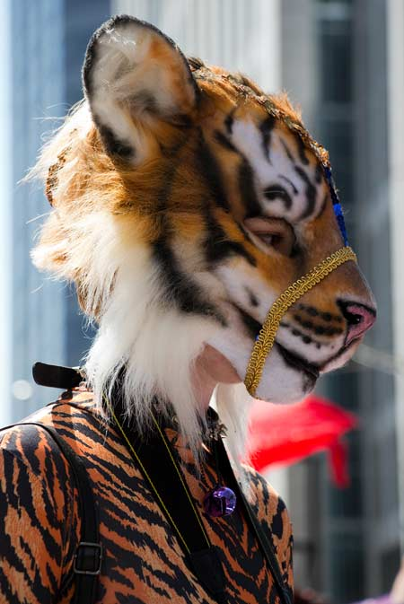 A tiger preparing for the Pride parade